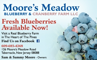 Fresh Blueberries Available Now!